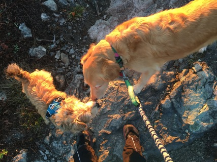 Dogs on the trail.